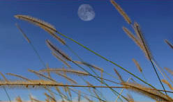 moon and meadow grass at campsite